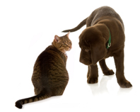 animal stories - hero dog - cat and puppy