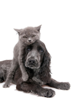 animal stories - animal quotes - grey cat and dog