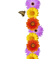 work attitude - flowers and butterfly