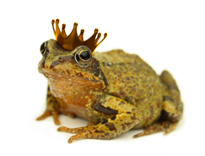 royal genealogy - frog prince