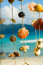 get  rich fast - sea shells on strings