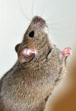 I can attitude - tiny mouse