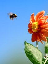 inspirational words - bee and flower