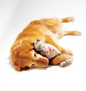 tired all the time - dog and toy cat