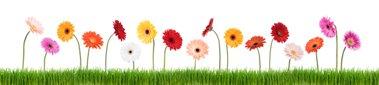 work attitude - row of flowers