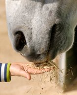 the day the laughter died - horse eating from hand